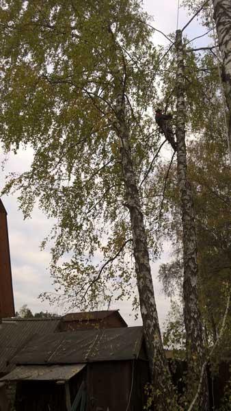 GuahooИзвестная финская самые старые деревья подмосковья составу применяемых